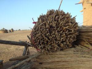 Millet harvest, Burkina Faso