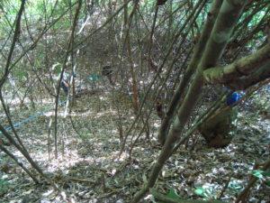 Setting up plots, Laos