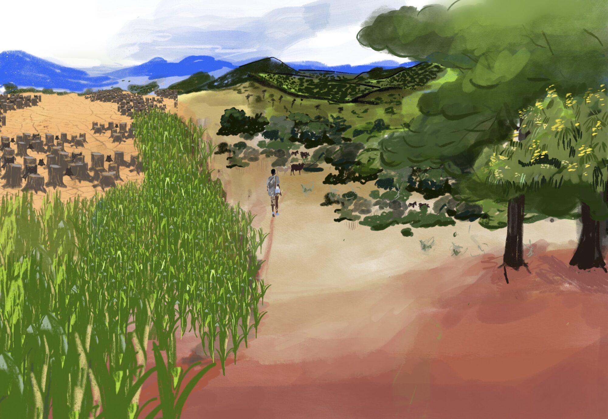 Livelihoods Agriculture Nutrition Deforestation